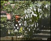 view Murphy Garden digital asset: Murphy Garden: 1926