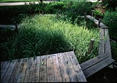 view [Milt & Barbara Rohwer Garden]: the elevated boardwalk; tall sedges and grasses shelter the water garden from the street. digital asset: [Milt & Barbara Rohwer Garden] [transparency]: the elevated boardwalk; tall sedges and grasses shelter the water garden from the street.