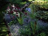 view [Milt & Barbara Rohwer Garden]: ferns, Japanese primroses, and bluebells comprise a border. digital asset: [Milt & Barbara Rohwer Garden] [transparency]: ferns, Japanese primroses, and bluebells comprise a border.
