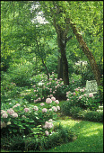 view [Joseph Thomas Mathis House Garden]: hundreds of hydrangeas bloom in May and June. digital asset: [Joseph Thomas Mathis House Garden]: hundreds of hydrangeas bloom in May and June.: 2007 Jun.