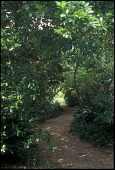 view [Joseph Thomas Mathis House Garden]: a gravel path shaded by magnolia limbs connects the front and back lawns. digital asset: [Joseph Thomas Mathis House Garden]: a gravel path shaded by magnolia limbs connects the front and back lawns.: 2007 Jun.