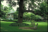 view [Joseph Thomas Mathis House Garden]: two Chippendale-style swings hang from an old live oak tree. digital asset: [Joseph Thomas Mathis House Garden]: two Chippendale-style swings hang from an old live oak tree.: 2007 Jun.