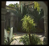 view [Chapultepec Castle]: a courtyard in the castle. digital asset: [Chapultepec Castle]: a courtyard in the castle.: 1937 Jan.