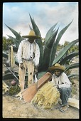 view [Miscellaneous Sites in Mexico]: two farmers and an agave plant in an unidentified location. digital asset: [Miscellaneous Sites in Mexico]: two farmers and an agave plant in an unidentified location.: 1937 Jan.