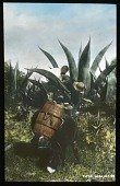 view [Miscellaneous Sites in Mexico]: a man, possibly harvesting agave, alongside a barrel-laden donkey in an unidentified location. digital asset: [Miscellaneous Sites in Mexico]: a man, possibly harvesting agave, alongside a barrel-laden donkey in an unidentified location.: 1937 Jan.