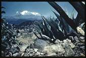 view [Miscellaneous Sites in Mexico]: looking toward the dormant volcano Iztaccihuatl. digital asset: [Miscellaneous Sites in Mexico]: looking toward the dormant volcano Iztaccihuatl.: 1937 Jan.