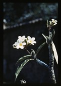 view [Miscellaneous Sites in Mexico]: close up of flowers. digital asset: [Miscellaneous Sites in Mexico]: close up of flowers.: 1937 Jan.