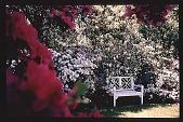 view [Untitled Garden]: bench at end of terrace garden. digital asset: [Untitled Garden]: bench at end of terrace garden.: [199-?]