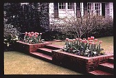 view [Untitled Garden]: view up steps to terrace. digital asset: [Untitled Garden]: view up steps to terrace.: [199-?]