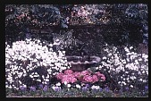 view [Untitled Garden]: pool in terrace garden. digital asset: [Untitled Garden]: pool in terrace garden.: [199-?]