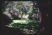 view [Untitled Garden]: bench in back garden. digital asset: [Untitled Garden]: bench in back garden.: [199-?]