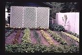 view [Untitled Garden]: latticework and vegetable garden. digital asset: [Untitled Garden]: latticework and vegetable garden.: [199-?]
