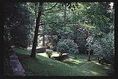 view [Cheeononda]: hillside planting. digital asset: [Cheeononda]: hillside planting.: 1997