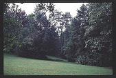 view [Cheeononda]: evergreen. digital asset: [Cheeononda]: evergreen.: 1997