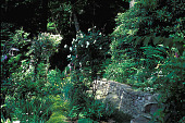 view [Pipes of Pan]: rock wall at first level of the garden with stone bench. digital asset: [Pipes of Pan]: rock wall at first level of the garden with stone bench.: 2002 Jun.