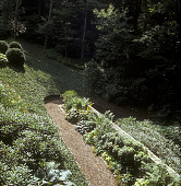 view [The Cottage Garden]: dirt path leading down hillside towards wooded area. digital asset: [The Cottage Garden]: dirt path leading down hillside towards wooded area.: 2004 Jul.