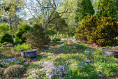 view [Montrose]: In the Scree Garden large cast iron cooking pots are used as planters. digital asset: [Montrose]: In the Scree Garden large cast iron cooking pots are used as planters.: 2018 April 18