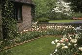 view [Jennings Garden]: garden detail showing lawn and tulips. digital asset: [Jennings Garden]: garden detail showing lawn and tulips.: 1960 May.