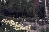 view [McGraw Garden]: terrace about ten years after landscaping. digital asset: [McGraw Garden]: terrace about ten years after landscaping.: 1972 May.