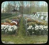 view Levis Garden: Chrysanthemums digital asset: Levis Garden [slide]