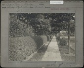 view Unidentified Garden in Long Branch, New Jersey: Ligustrum hedge digital asset: Unidentified Garden in Long Branch, New Jersey [photoprint]