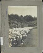 view Florham digital asset: Florham [photoprint]
