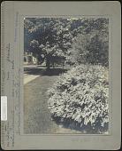 view Cleveland Garden digital asset: Cleveland Garden [photoprint]
