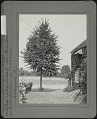view Bobbink & Atkins digital asset: Bobbink & Atkins [photoprint]