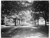 view [Miscellaneous Sites in Glen Ridge, New Jersey]: an unidentified site. digital asset: [Miscellaneous Sites in Glen Ridge, New Jersey] [glass negative]: an unidentified site.