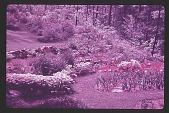 view [Watts Garden]: lower rear slope. digital asset: [Watts Garden]: lower rear slope.: 1940.