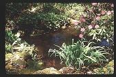view [Watts Garden]: looking towards fish pond. digital asset: [Watts Garden]: looking towards fish pond.: 1997 May.