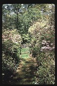 view [Watts Garden]: moss path leading to lower garden. digital asset: [Watts Garden]: moss path leading to lower garden.: 1997 May.