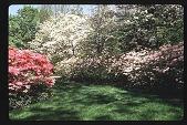 view [Watts Garden]: array of azaleas and dogwoods behind home. digital asset: [Watts Garden]: array of azaleas and dogwoods behind home.: 1997 May.
