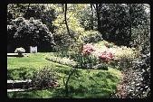 view [Watts Garden]: rear lawn with perennial beds and azaleas. digital asset: [Watts Garden]: rear lawn with perennial beds and azaleas.: 1997 May.