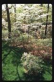view [Watts Garden]: view of mature azaleas and dogwoods from second story window. digital asset: [Watts Garden]: view of mature azaleas and dogwoods from second story window.: 1997 May.