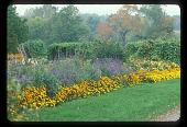 view [Four Oaks Farm]: garden border in late summer. digital asset: [Four Oaks Farm] [slide (photograph)]: garden border in late summer.