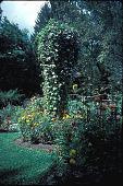 view [Trenton Garden III]: martin house and morning glories. digital asset: [Trenton Garden III]: martin house and morning glories.: 2001 Oct.