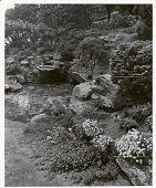 view [Laurelwood Arboretum]: rock garden. digital asset: [Laurelwood Arboretum] [photoprint]: rock garden.