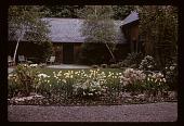 view [Woodlands Stables, Llewellyn Park]: Garden after landscaping in spring. digital asset: [Woodlands Stables, Llewellyn Park]: Garden after landscaping in spring.: 1963?