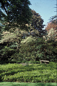 view [Prin Hall]: from the side of the house looking west to bench with tree and shrub area behind. digital asset: [Prin Hall]: from the side of the house looking west to bench with tree and shrub area behind.: 2002.