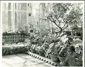 view [Billings Garden]: interior of greenhouse. digital asset: [Billings Garden] [safety film negative and photographic print]: interior of greenhouse.