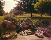 view [Borman Garden]: terrace garden pool with mature plantings and frogs on lily pads. digital asset: [Borman Garden] [film transparency]: terrace garden pool with mature plantings and frogs on lily pads.
