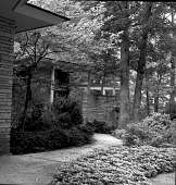 view [Wing Haven]: walkway by house, bordered by ground cover plants and evergreens. digital asset: [Wing Haven] [safety film negative]: walkway by house, bordered by ground cover plants and evergreens.