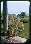 view [Peters Garden]: white wisteria seen from porch. digital asset: [Peters Garden] [slide (photograph)]: white wisteria seen from porch.