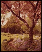view [Low Garden]: flowering cherry and spring flowers in formal garden, with stone garden house beyond. digital asset: [Low Garden] [film transparency]: flowering cherry and spring flowers in formal garden, with stone garden house beyond.