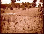 view [Mackie Garden]: seedling area with shade lovers under lathwork. digital asset: [Mackie Garden] [photonegative]: seedling area with shade lovers under lathwork.