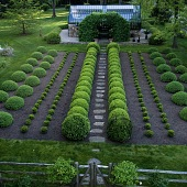 view [Kennelston Cottage]: The boxwood nursery, climbing hydrangea covered arbor and aluminum and glass greenhouse. digital asset: [Kennelston Cottage]: The boxwood nursery, climbing hydrangea covered arbor and aluminum and glass greenhouse.