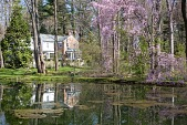 view [New Jersey Woodland Property]: the spring-fed pond is accessible for bass fishing. digital asset: [New Jersey Woodland Property]: the spring-fed pond is accessible for bass fishing.: 2009 Jun.