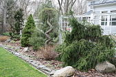 view [Lagos Garden]: specimen trees along one side of the property against an architectural fence. digital asset: [Lagos Garden]: specimen trees along one side of the property against an architectural fence.: 2011 Apr.
