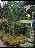 view [Mountsier/ Hardie Gardens]: Tall grasses and daylilies with the colonnaded garage in the background. digital asset: [Mountsier/ Hardie Gardens] [transparency]: Tall grasses and daylilies with the colonnaded garage in the background.